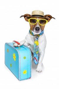 dog tourist
