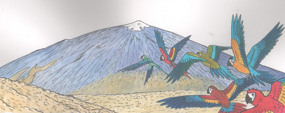teide mountain and parrots