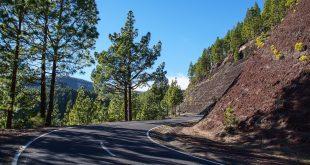 tenerife pine forest