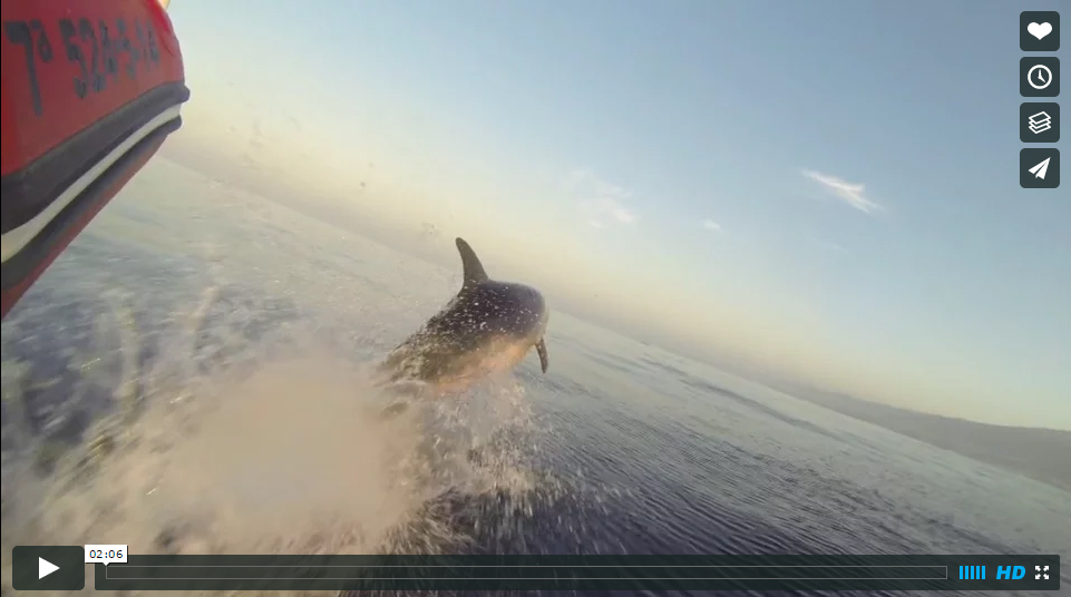 sunrise with dolphins in tenerife