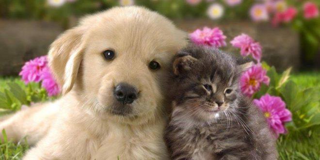 Tenerife Animal Charities and Organisations